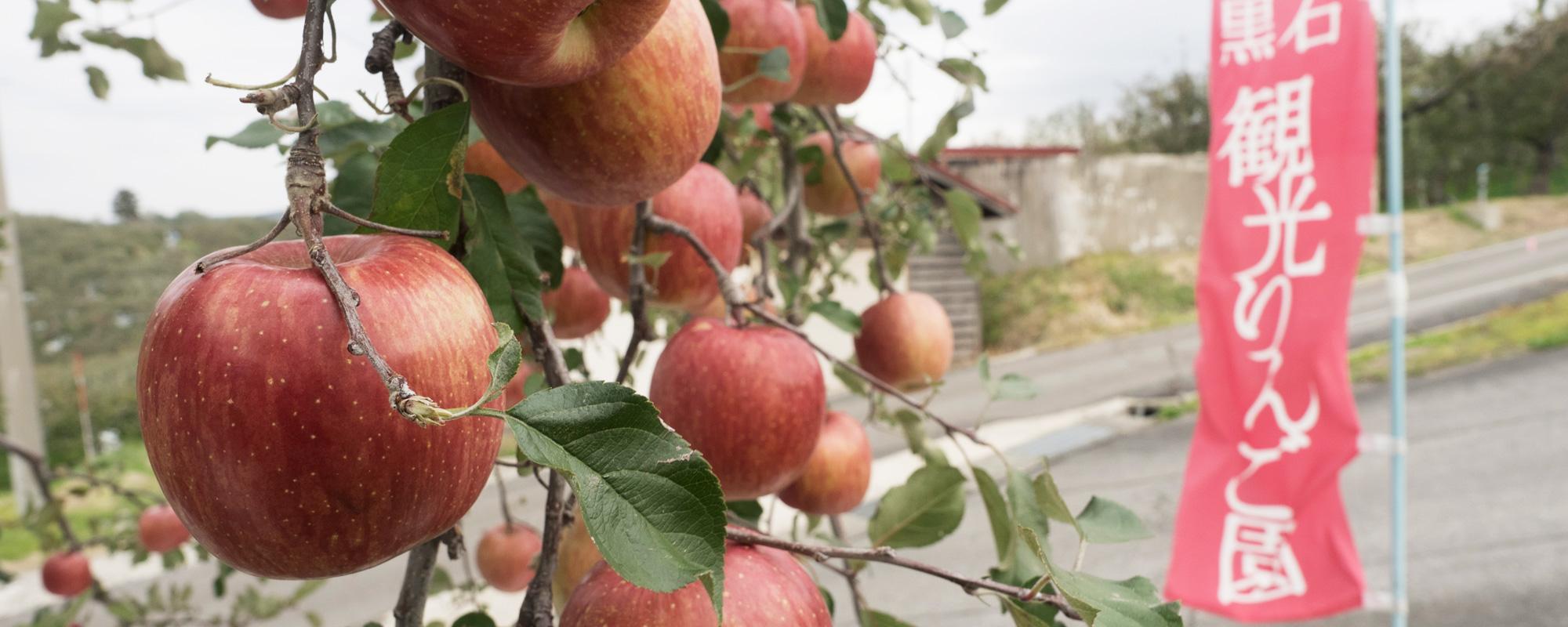 黒石市の体験スポット 観光りんご園