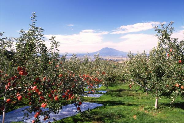 黒石観光りんご園